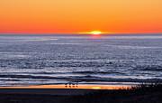 Susan Wiedmann - Marbled Godwits Reflecting A Sunset
