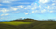 Creat Prints - March of the Cypress Trees Print by Elaine Walsh