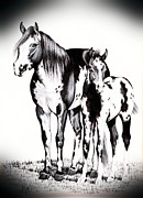 Horses Drawings - Mare and Colt by Cheryl Poland