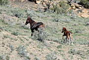 Margaret  Slaugh - Mare and Colt Wildhorses