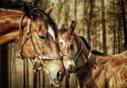 Shawna Mac - Mare and Foal by Shawna...