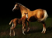 Best Selling Posters - Mare and Foal Poster by Shere Crossman
