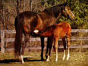 Pamela Phelps - Mare and Nursing Foal-Textured Image