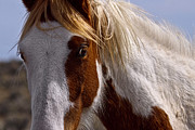 Forelock Photos - Mare Closeup D9677 by Wes and Dotty Weber