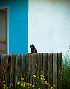 Cat Portraits Photo Prints - Marfa Cat Print by Sonja Quintero