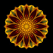 David J Bookbinder - Marigold Flower Mandala