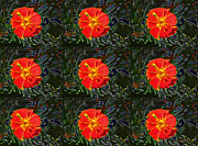 Companion Digital Art - Marigold Mighty by Kathy Bassett