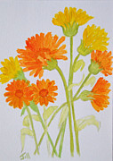 Hand Crafted Paintings - Marigolds by Jill Armstrong