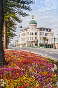 Flower Beds Prints - Marine Parade in Spring Napier New Zealand Print by Colin and Linda McKie