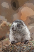 Hoary Prints - Marmot Pup Portrait- Abstract Print by Tim Grams
