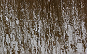 Reflection In Water Posters - Marsh Grass Reflections Abstract 2 Poster by Mary Bedy