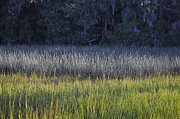 Beach Photographs Art - Marsh Grasses and Moss-Covered Trees on Jekyll Island 1.1 by Bruce Gourley