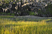 Beach Photographs Art - Marsh Grasses and Moss-Covered Trees on Jekyll Island 1.3 by Bruce Gourley