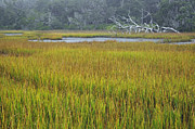 Green - Marsh Grasses and Moss-Covered Trees on Jekyll Island 1.4 by Bruce Gourley
