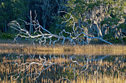 Green - Marsh Grasses and Moss-Covered Trees on Jekyll Island 1.6 by Bruce Gourley