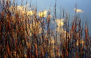 Water Reflections Photos - Marsh Mellow Clouds by Karen Wiles
