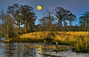 Mike Covington Art - Marsh Moon by Mike Covington