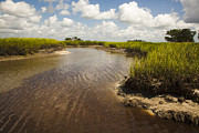 St. Simons Island Art - Marsh River by Barbara Marie Kraus