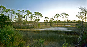 Florida Gifts Framed Prints - Marsh. St. Marks N.W.R. Framed Print by Chris  Kusik
