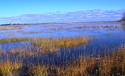 Barnstable Ma Prints - Marsh with Blue Sky Print by John Doble