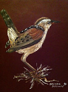 Wren Painting Framed Prints - Marsh Wren Framed Print by Brenda Brown