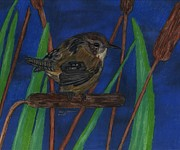 North American Wildlife Drawings Posters - Marsh Wren Poster by Don  Gallacher