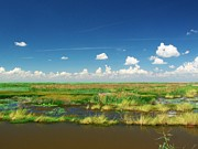 Robert Brown - Marshes of Anahuac