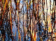 Nature Abstracts Framed Prints - Marshgrass Framed Print by Karen Wiles