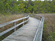 Jeff Moose - Marshland Boardwalk