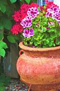 Martha Washington Geraniums In Textured Clay Pot Print by Sandra Foster