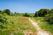 Michelle Wiarda - Marthas Vineyard Pathway