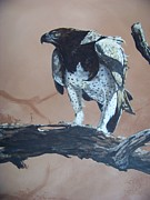 Martial Eagle Framed Prints - Martial Eagle Framed Print by Robert Teeling