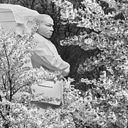Black And White Digital Art Posters - Martin Luther King Memorial through the Blossoms Poster by Mike McGlothlen