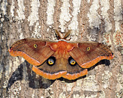 Al Wild Card Posters - Marvelous Moth Poster by Al Powell Photography USA
