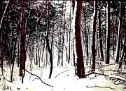 G Linsenmayer - MARYLAND WINTER FOREST...