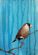 Shirley Paintings - Masked Finch by Shirley Dawson