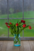 Ball Jars Posters - Mason Jar with Tulips Poster by Kay Pickens