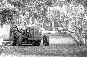 Red Hog Prints - Massey Ferguson Tractor Print by Scott Hansen
