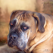 Dog Print Mixed Media Framed Prints - Mastiff Portrait Framed Print by Carol Cavalaris