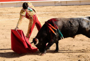 Sort Prints - Matador and Bull Print by Clarence Alford