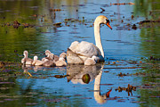 Metro Park Metal Prints - Maternal Reflection  Metal Print by James Marvin Phelps