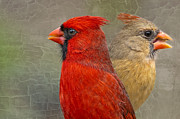 Male Northern Cardinal Photos - Mates by Bonnie Barry