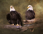 Eagle Framed Prints - Mates Framed Print by Jai Johnson