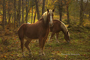 Grazing Horse Originals - Mates by Paul Herrmann