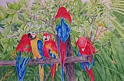 Group Of Birds Painting Posters - Maui Macaws Poster by Rhonda Leonard