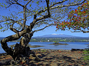Snow-capped Peak Prints - Mauna Kea Volcano Over Hilo Bay Hawaii Print by Daniel Hagerman