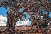 Jenny Rainbow - Mauritian Road. Nature in Alien Skin
