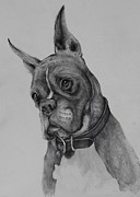 Boxer Dog Drawings Prints - Maverick Print by Jean Cormier