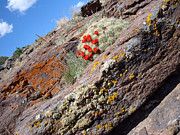 Lichen Pictures Prints - May Day Print by Theresa Baker