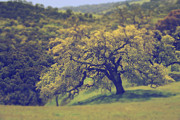 Lone Tree Metal Prints - Maybe Its Better This Way Metal Print by Laurie Search